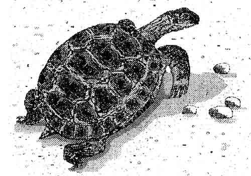 Черепаха — это символ мудрости и долголетия.