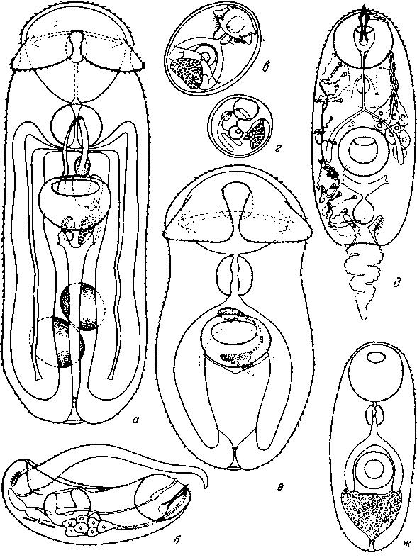 Метгемальбумин