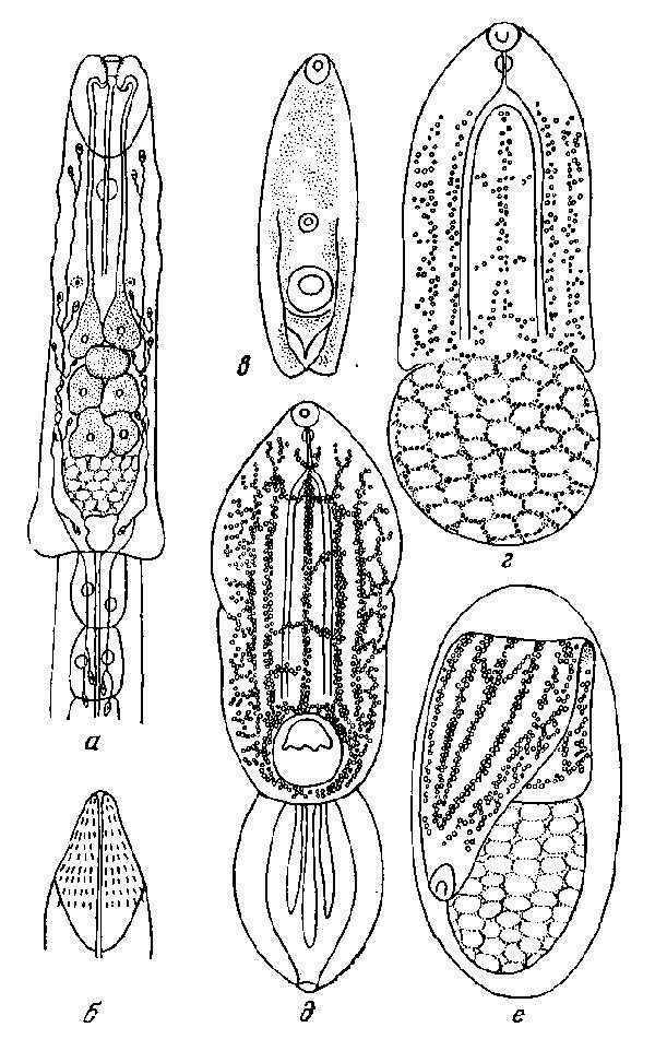 Цетилпиридиниум