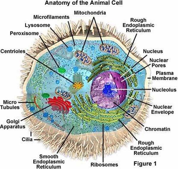 Endoplasmic reticulum analogies