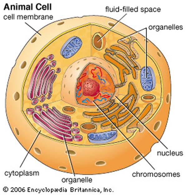 plant and animal cells essay