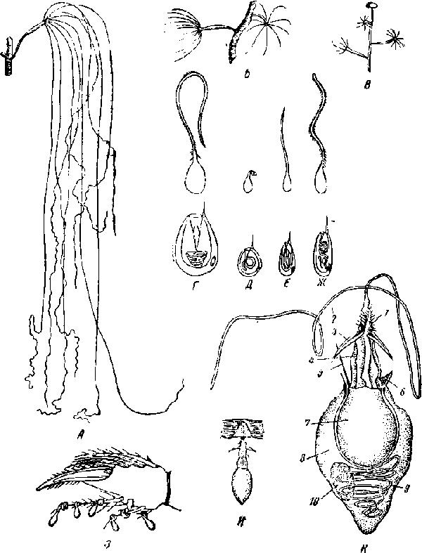 Г—Ж — схема четырех типов