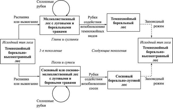 Схема сукцессий в бореальных
