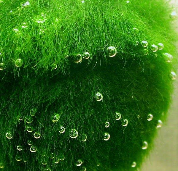 Аквариумные растения: фото, названия, описание
