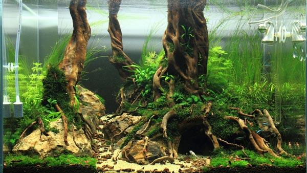Как сделать для аквариума корягу