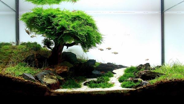 Аквариумные растения для начинающих Какие