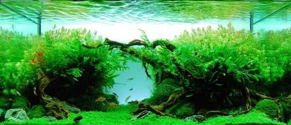 Аквариум: Водные растения. Содержание.