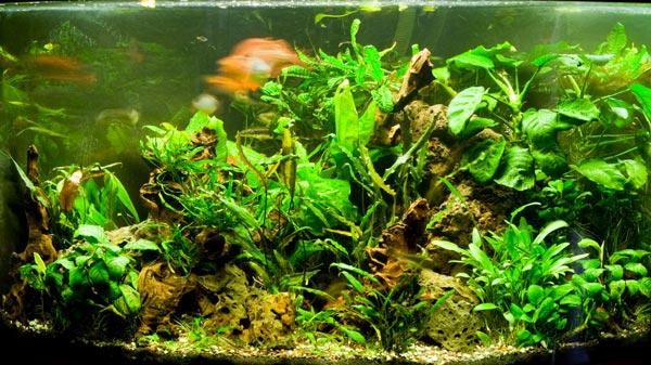 Аквариумные растения все для начинающих с фото и