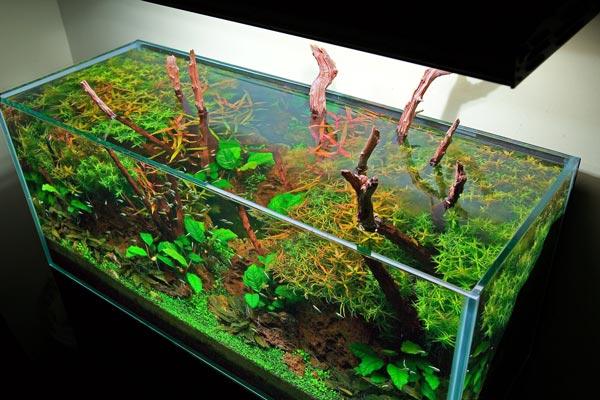 Грунт для аквариума с живыми растениями своими руками 51