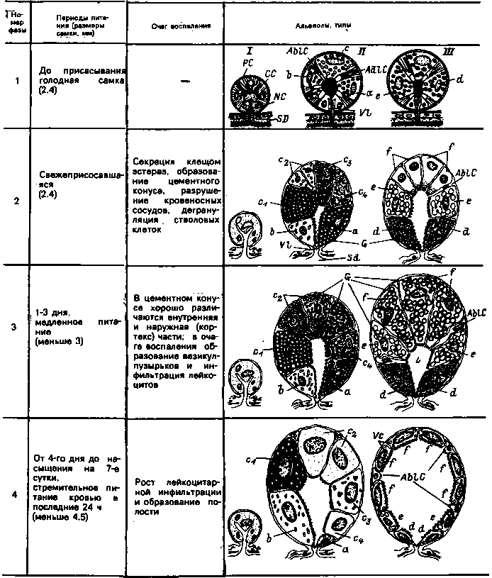 Схема функционирования альвеол