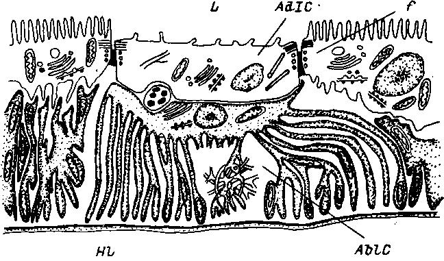 Схема расположения водяной