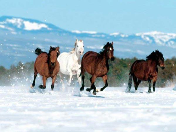 """Предпросмотр схемы вышивки  """"лошади """" ."""