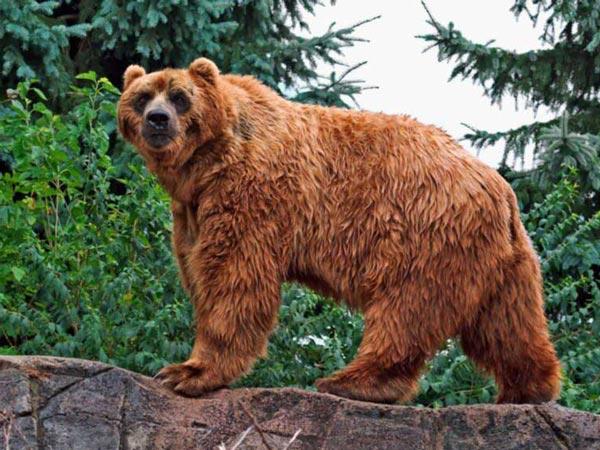 """Используйте правило:  """"лучше меньше - да лучше """"!  Вышивка крестом.  Схема вышивки  """"Медведь """".  190x143 крестов * 63..."""