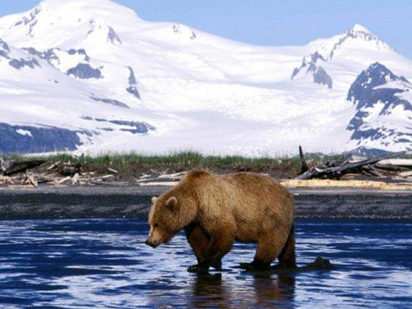 Фотки с бурым и белым медведями, с пандами показывают, как комфортно живётся им в диких условиях.