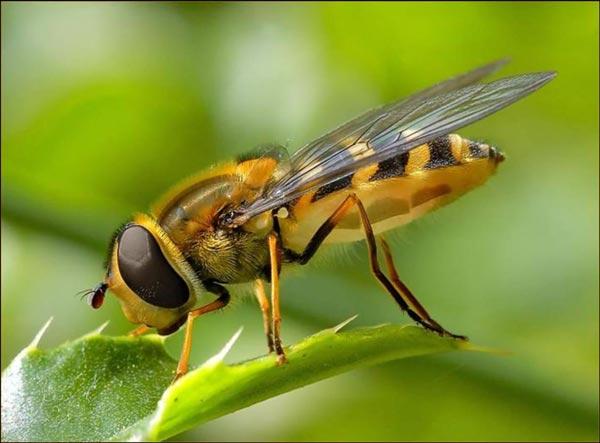 В мире существует огромное количество разных насекомых, и про всех можно рассказать что-то интересное.