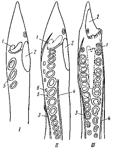 Три последующие стадии