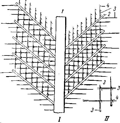 Схема строения опахала пера