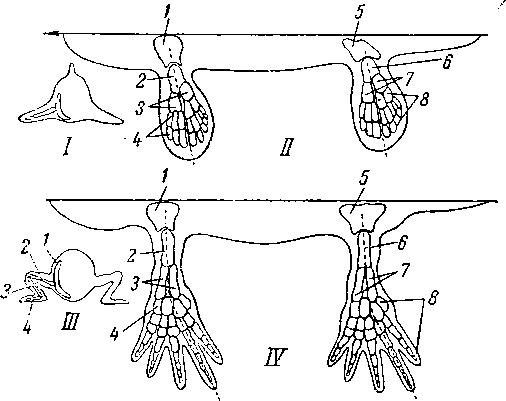 Схема преобразования скелета