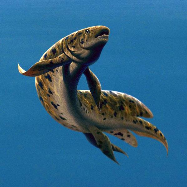 Двоякодышащие рыбы доклад по биологии 4051