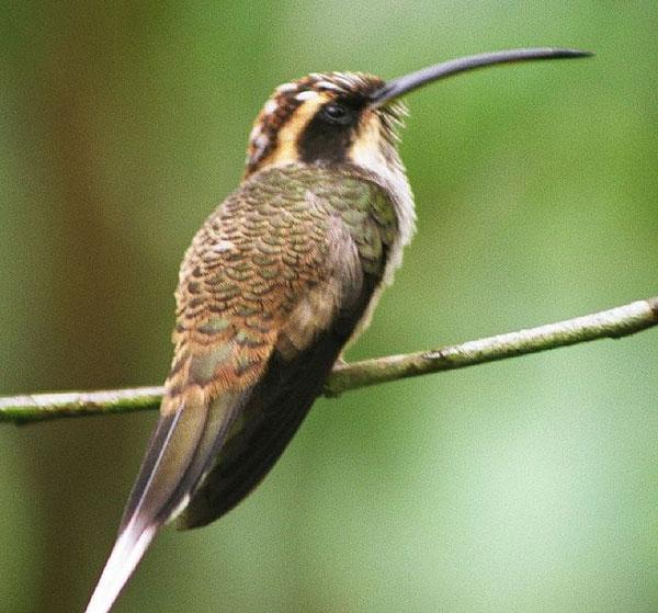 Пуховые и маховые перья птиц