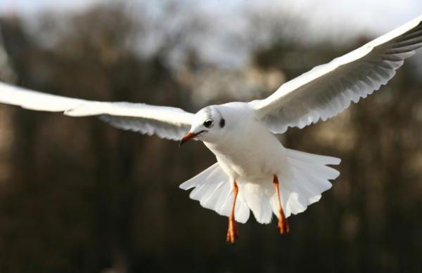 Выделительная и половая системы птиц.