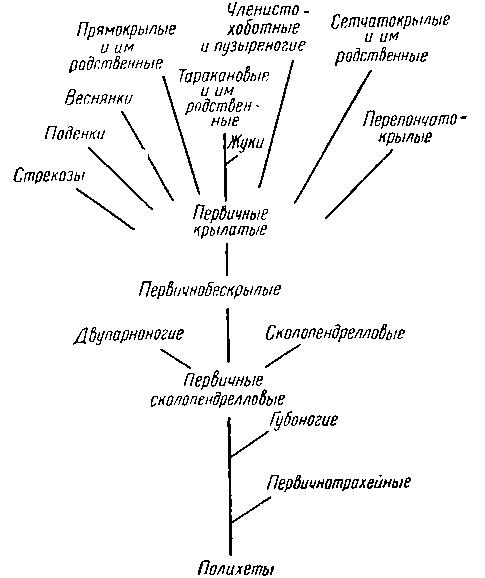 Схема филогенетического