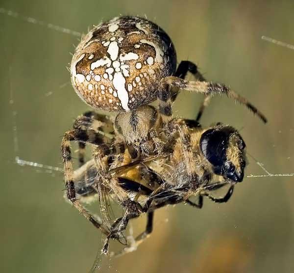 Играть в паука который ловит мух