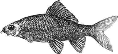 Препараты для стимуляции рыб на нерест