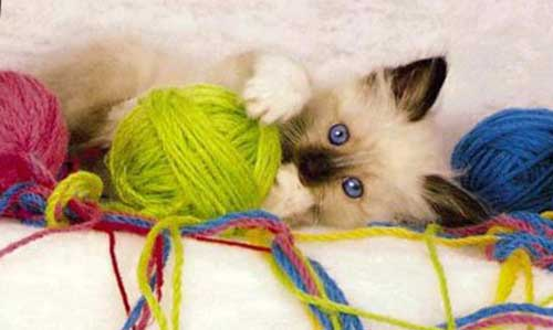 Клубок ниток кот