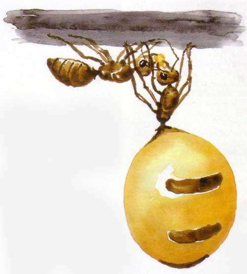 Жопа муравья идея